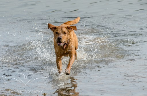 Dog_photographer_Derbyshire-35