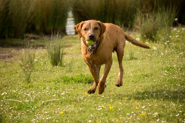 Dog_photographer_Derbyshire-37