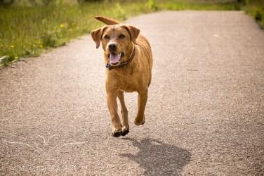 Dog_photographer_Derbyshire-40