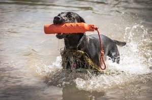 Dog_Photographer_Derbyshire-41