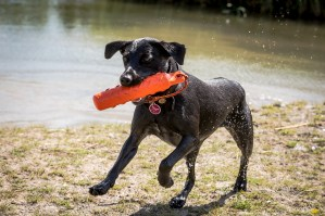 Dog_Photographer_Derbyshire-42