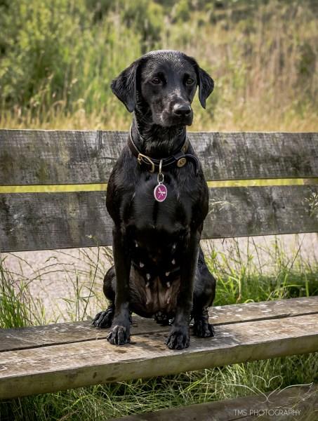Dog_Photographer_Derbyshire-43