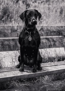 Dog_Photographer_Derbyshire-44