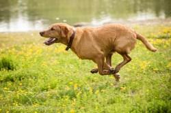 Dog_photographer_Derbyshire-45