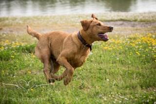 Dog_photographer_Derbyshire-60