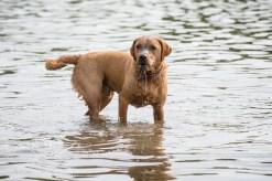Dog_photographer_Derbyshire-62