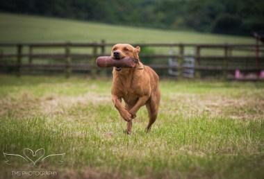 Dog_equine_Photographer_Derbyshire (25 of 74)