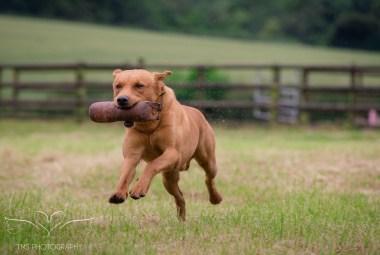 Dog_equine_Photographer_Derbyshire (26 of 74)