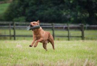 Dog_equine_Photographer_Derbyshire (29 of 74)