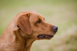 Dog_equine_Photographer_Derbyshire (3 of 74)