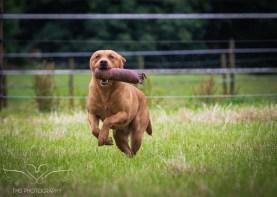 Dog_equine_Photographer_Derbyshire (31 of 74)