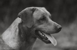 Dog_equine_Photographer_Derbyshire (39 of 74)