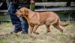 Dog_equine_Photographer_Derbyshire (43 of 74)