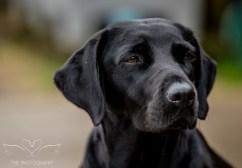 Dog_equine_Photographer_Derbyshire (53 of 74)