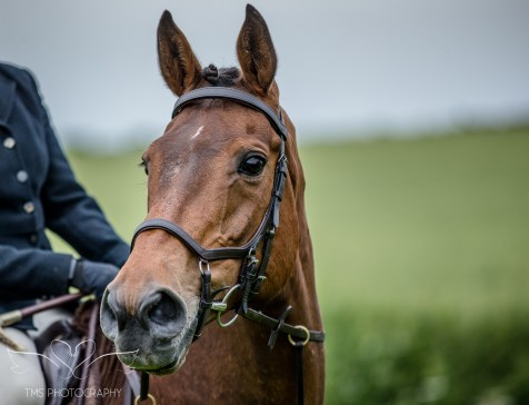 Dog_equine_Photographer_Derbyshire (58 of 74)