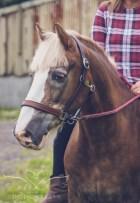 equine_phootgrapher_Staffordshire-47