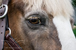 equine_phootgrapher_Staffordshire-50