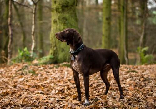 Dog_Photographer_Shropshire-10