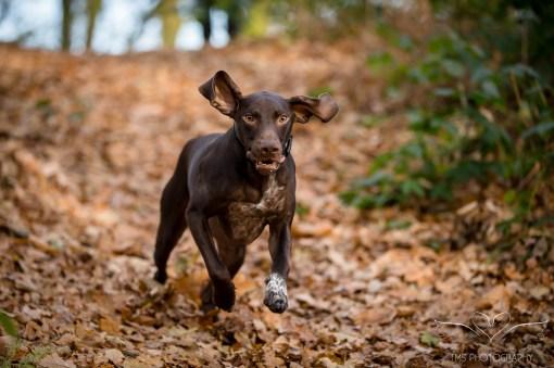 Dog_Photographer_Shropshire-13