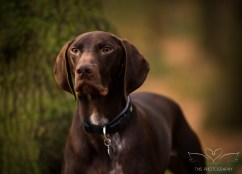 Dog_Photographer_Shropshire-21