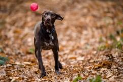 Dog_Photographer_Shropshire-24