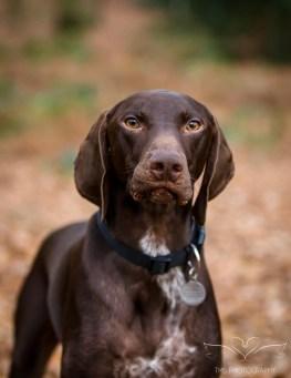 Dog_Photographer_Shropshire-29