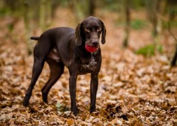 Dog_Photographer_Shropshire-60
