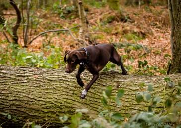 Dog_Photographer_Shropshire-67