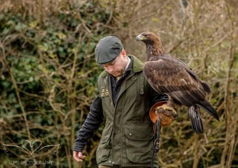 Birdsofprey_photography (1 of 71)