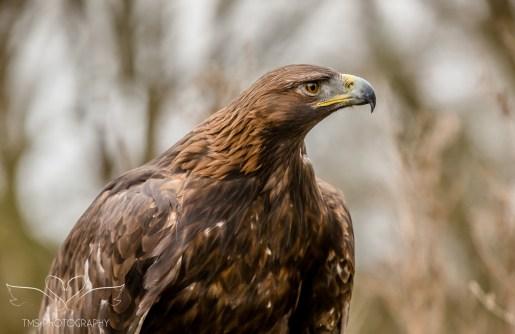 Birdsofprey_photography (12 of 71)