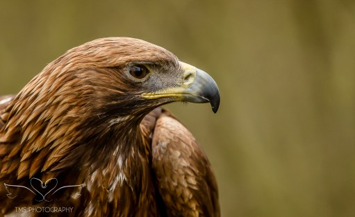 Birdsofprey_photography (13 of 71)