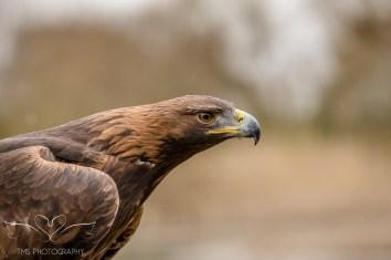 Birdsofprey_photography (16 of 71)