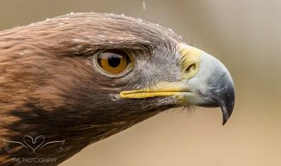 Birdsofprey_photography (17 of 71)