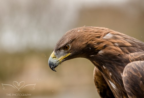 Birdsofprey_photography (18 of 71)