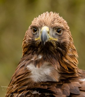 Birdsofprey_photography (2 of 71)