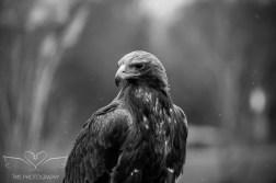 Birdsofprey_photography (20 of 71)