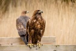 Birdsofprey_photography (23 of 71)