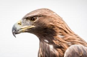 Birdsofprey_photography (26 of 71)