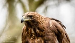 Birdsofprey_photography (28 of 71)