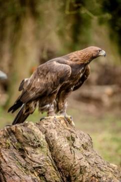 Birdsofprey_photography (29 of 71)
