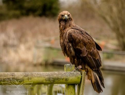 Birdsofprey_photography (3 of 71)