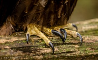 Birdsofprey_photography (40 of 71)