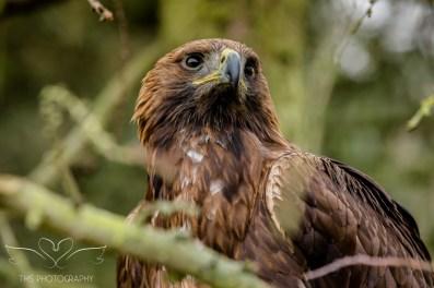 Birdsofprey_photography (47 of 71)