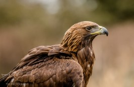Birdsofprey_photography (5 of 71)