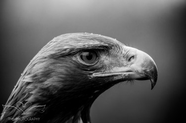 Birdsofprey_photography (50 of 71)