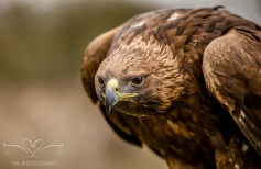 Birdsofprey_photography (6 of 71)