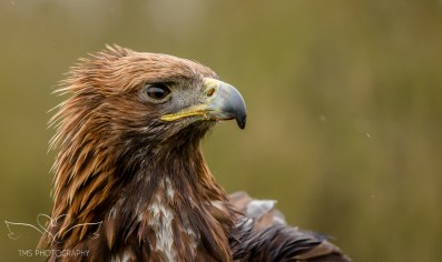 Birdsofprey_photography (67 of 71)