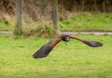 Birdsofprey_photography (71 of 71)
