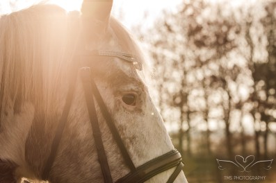 equine_Photographer_Leicestershire-31