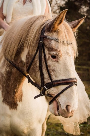 equine_Photographer_Leicestershire-32